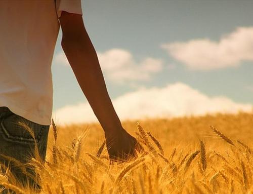 Beneficios de pasear por el campo