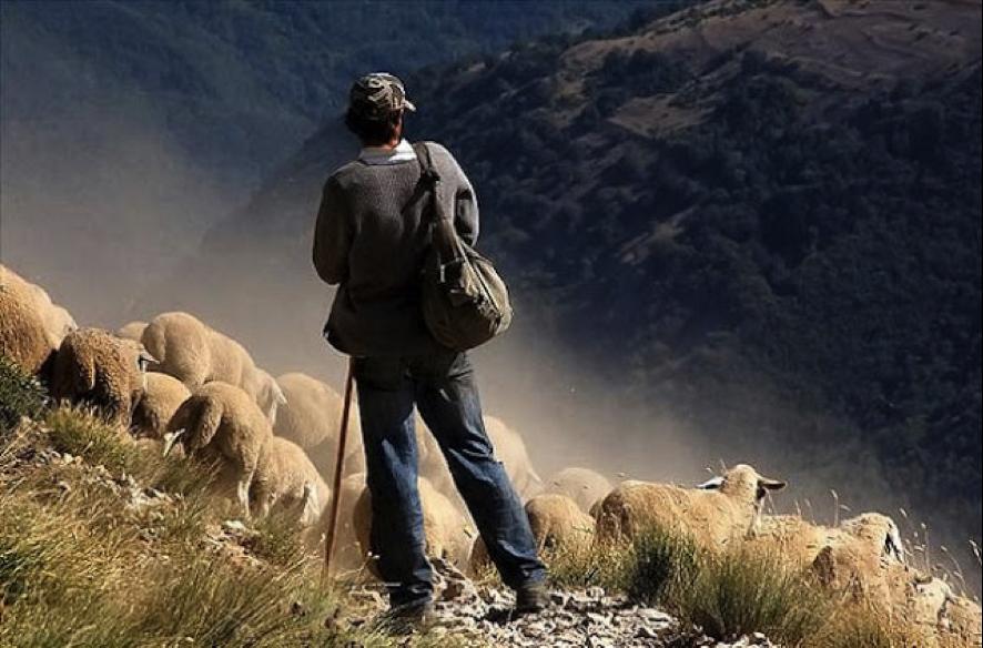 Cabrero pastoreando