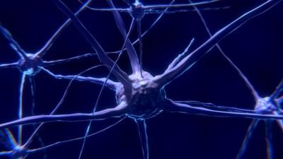 relaciones entre educación ambiental y neuroeducación: neurona