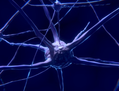 Relaciones entre Educación Ambiental y Neuroeducación
