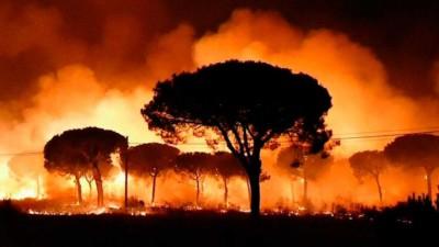 Cómo prevenir incendios forestales