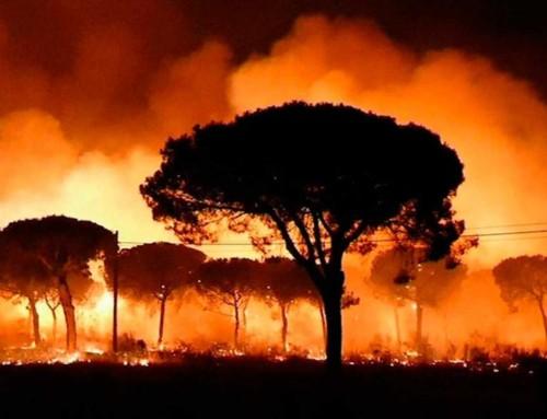 Cómo prevenir incendios forestales y actuar ante ellos