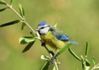 aumentando la biodiversidad del pinar