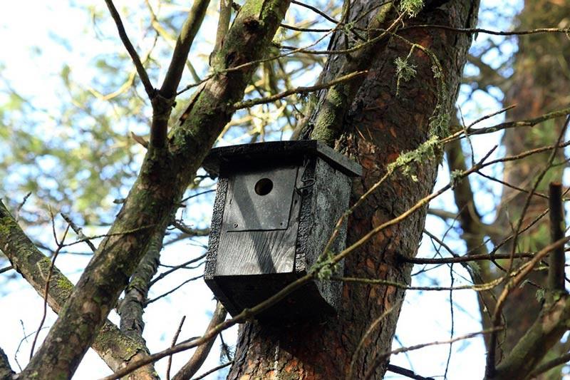 Aumentando la biodiversidad del pinar de galena