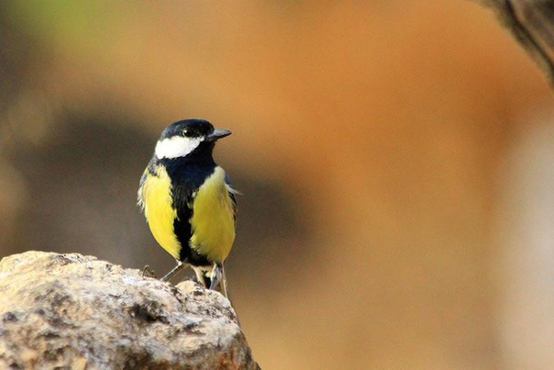 Aumentando la biodiversidad del pinar zagala