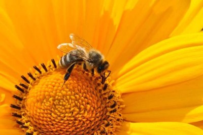 Día Internacional de las abejas
